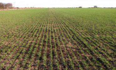 El Gobierno cambió el sistema de exportación de trigo por irregularidades en la campaña anterior