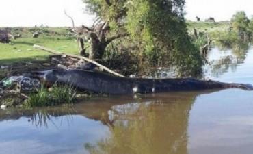 Insólito hallazgo en Berazategui: apareció una ballena muerta