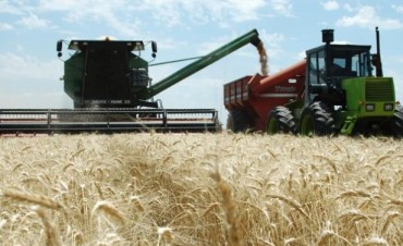 La Sociedad Rural criticó la decisión de liberar más trigo