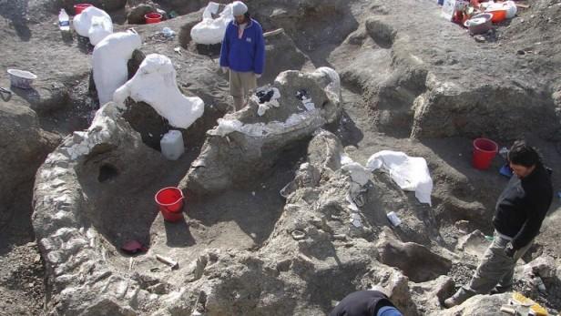 Encontraron en la Patagonia los huesos de un dinosaurio que marcó un récord de tamaño