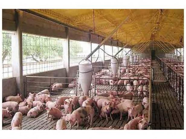 La provincia entrega 5 millones de pesos para el desarrollo de la actividad porcina