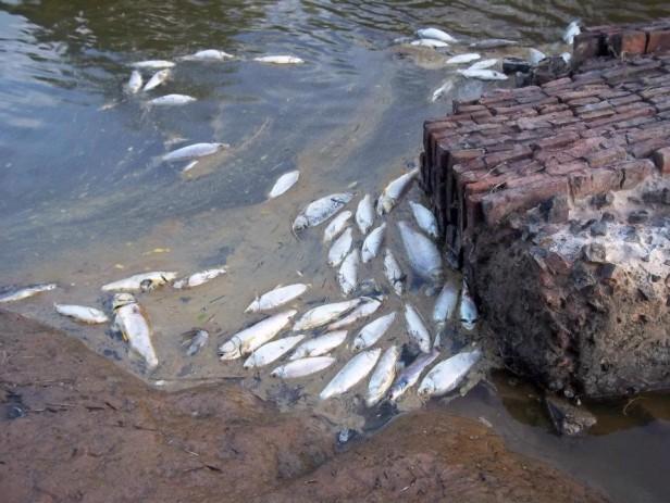 Cientos de peces envenenados en un arroyo de San Martín de las Escobas