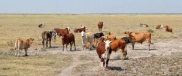 El Gobierno se reúne con productores por la sequía que afecta al campo