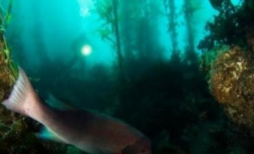 Descubren casualmente un primitivo bosque submarino en el Golfo de México