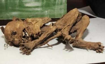 Una familia santafesina exhibió los restos de un animal similar al mítico